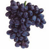 Black Grape Sorbet